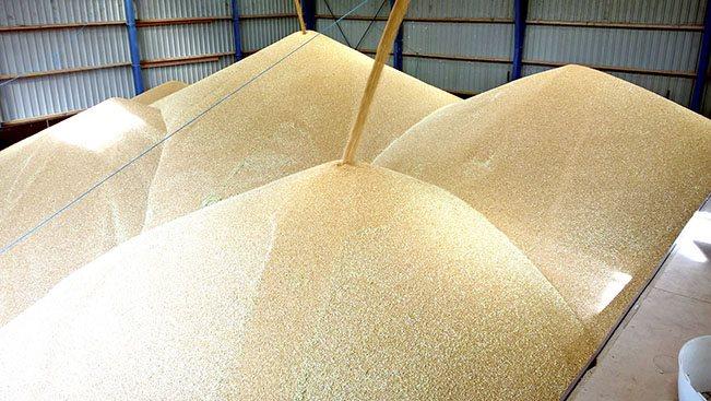 - I stedet for at gemme hele produktionen på lageret, kan der være større gevinst ved at sælge det overskydende korn og få penge i kassen, pointerer Ove Lund, seniorkonsulent hos Seges.