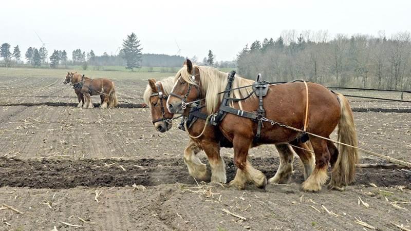»Den jydske hest i Sydjylland« samlede færre heste i år. I fjor var der også fynske hestefolk med, men de deltog ikke i år.