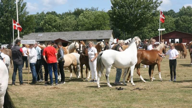 Sådan blev samtlige næsten 300 heste bedømt på årets dyrskue i Odense.