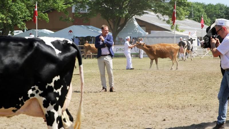 Søren Kørup Christensen, der har været kvægdommer i 25 år, roste kvaliteten blandt malkekøerne på Roskilde Dyrskue. Foto: Jesper Hallgren