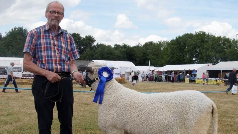 Sådan blev fårene bedømt fredag på dyrskuet i Odense