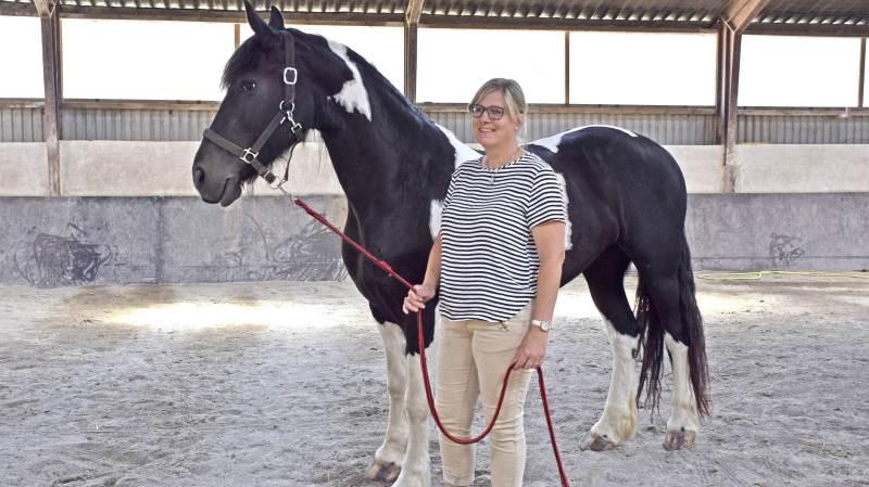 - Vores 7-års Dansk Barok Pinto hoppe, Ivalo, har vi selv avlet, fortæller Brahetrolleborgforeningens nye formand, Tina Kirkegaard Eriksen, som her præsenterer hoppen i gårdens ridehal.