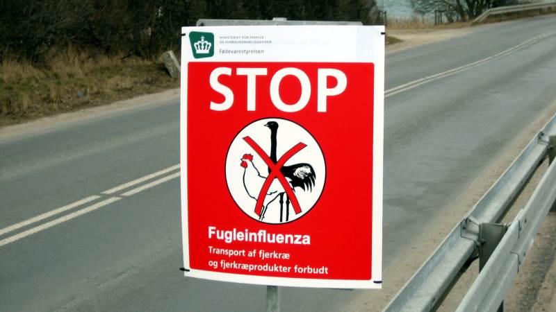 Selv om det er sommer, skal fjerkræavlere stadig være opmærksom på faren for fugleinfluenza. Det viser fundet af H5N6 ved Lolland forleden. Arkivfoto.