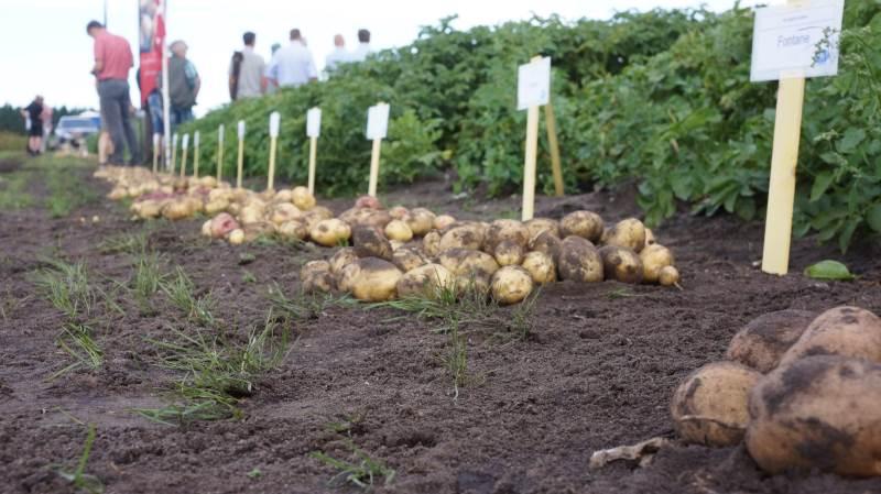 er var stor tilslutning,  da SAGRO holdt kartoffeldag i sidste uge.