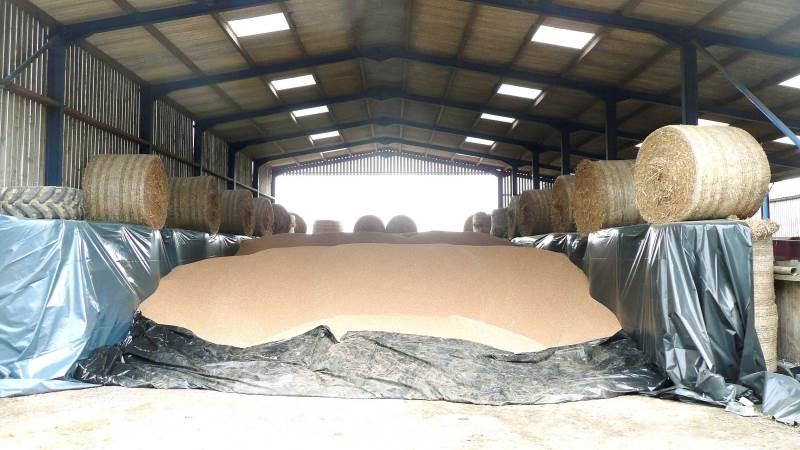 Hvis man ikke nedkøler og belufter, kan man senere risikere at finde et lager, hvor kornet er levende. På billedet er kornet opbevaret midlertidigt uden beluftning. Foto: Sukup Europe