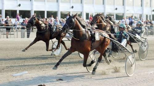 Hesten i Fokus 2018 giver en fantastisk mulighed for at se mange forskellige typer af heste og ponyer i Skive. Man kan opleve de forskellige måder de kan bruges på, hvad enten det er i forbindelse med avl, ridning eller kørsel, og hvad enten det er til sport, fritid, konkurrence eller som kæledyr.