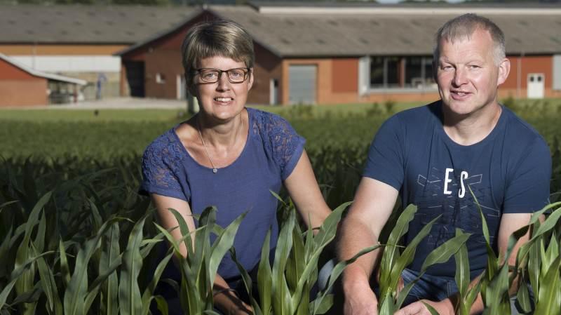 Tre landbrugsejendomme på Djursland er klar når der er Åbent Landbrug søndag den 16. september. Et af stederne er hos familien Pedersen på Krogsagergård ved Randers.