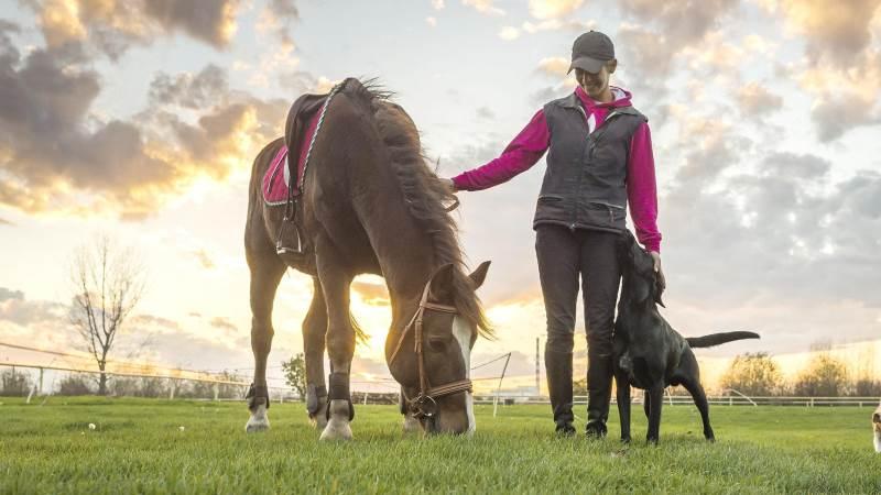 På et tidspunkt kommer den dag, hvor det er tid til at lade hesten gå på pension. Men hvordan ved man, at det er ved at være tid, og hvad er egentlig en god pensionisttilværelse for en hest? Agria Dyreforsikrings svenske dyrlæge, Karl-Henrik Heimdal, giver gode råd.