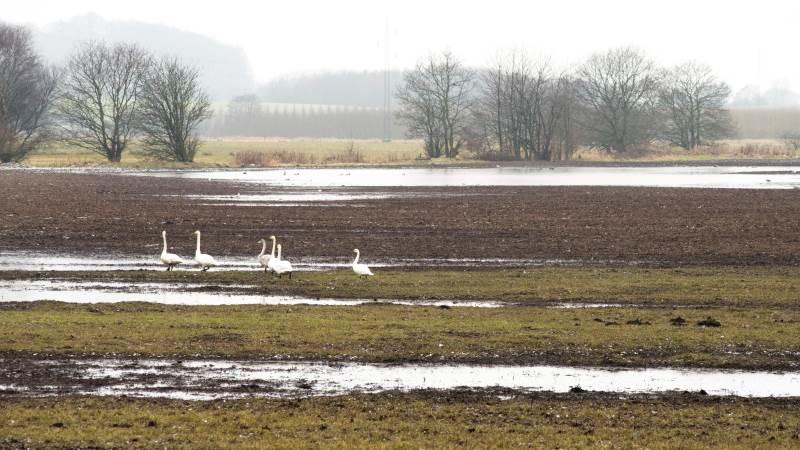 Det er nu, at vandløbene skal tilses for at undgå et efterår med alt for våde marker.