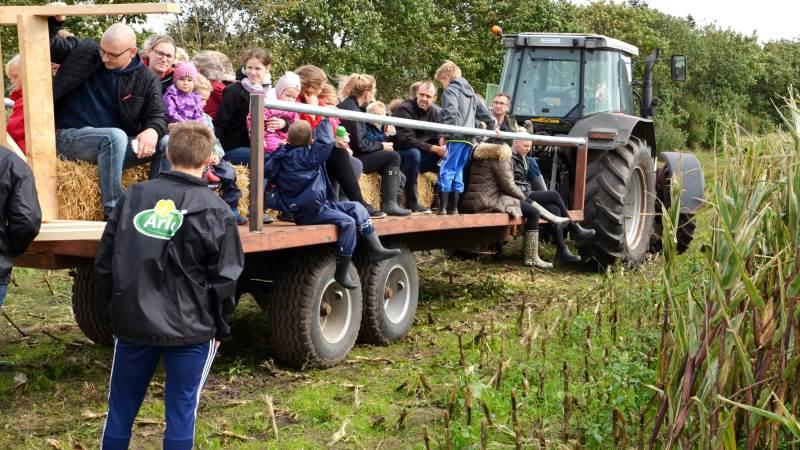 De besøgende hos Karin og Niels Chr. Kristiansen kunne blandt andet komme på en times køretur i majsmarken i traktorvogn ud til flyvergraven i Houm Enge. Foto: Erik Poulsen