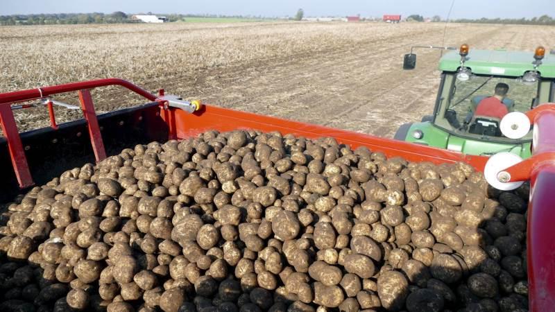 På tirsdag den 13. november er der stiftende generalforsamling for den kommende fynske kartoffelmelsfabrik. Arkivfoto