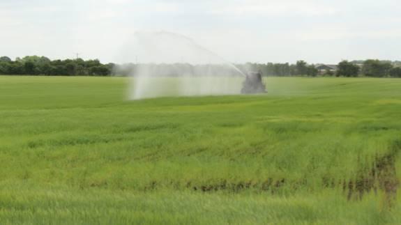 Mange steder i landet skriger afgrøderne på vand, og det kan man blandt andet mærke hos Vejle Kommune. Her har man fået en del henvendelser fra landmænd, der gerne vil vande mere end de har tilladelse til. Arkivfoto.