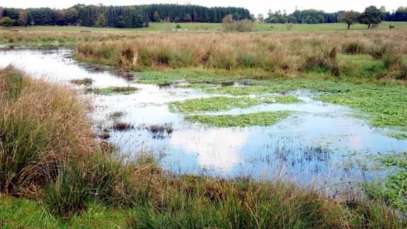 Ros til flere dele af tiltag fra Landbrug & Fødevarer til de regler, der kommer til at gælde til næste års minivådområdeordning.