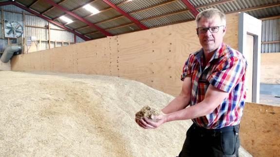 De to fodergræssorter, Regner Schultz Petersen, Teglgaard ved Bække, har tærsket, gav 2.500 kg råvare pr. hektar af særdeles fin kvalitet. – Jeg prioriterer vanding til rajgræsset højt, siger han. Foto: Bøje Østerlund