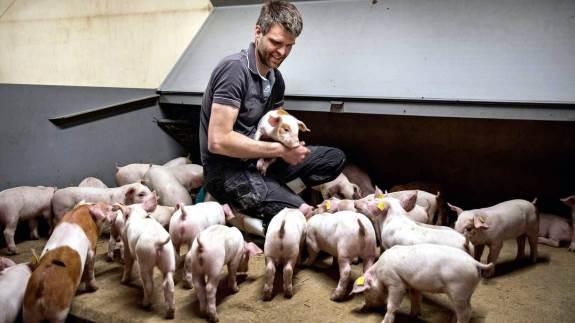 - Vi prøver hele tiden at benytte den nyeste viden og produkter her i svinestalden, så vores svinefoder er optimeret ud fra den nyeste viden, siger svineproducent Hans Christian Carstensen, Nørregaard Grise ved Gram i Sydjylland.