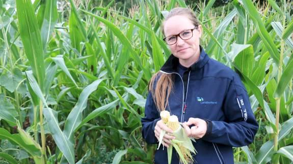 - Vi opfordrer de nordjyske landmænd til at vente i hvert fald to uger endnu med at snitte majsen, siger planteavlskonsulent i LandboNord, Tina Houlborg.