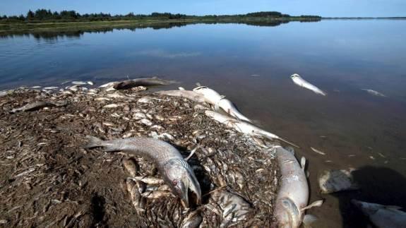 Iltsvind i tre dage i august har ført til massiv fiskedød i den sydlige del af Filsø i Vestjylland. Landbruget har fra flere sider allerede fået skylden, men ifølge lektor på Københavns Universitet Theis Kragh, er landbruget ikke den direkte årsag.