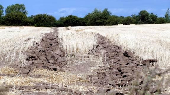 Kun her, hvor marken har været vandlidende, kan det begrundes at anvende en grubber, der løfter op i de dybere jordlag. Ellers bør grubningen foretages med en smal grubbetand, der ikke bringer store klodser af lerjord op på overfladen. Fotos: Bøje Østerlund