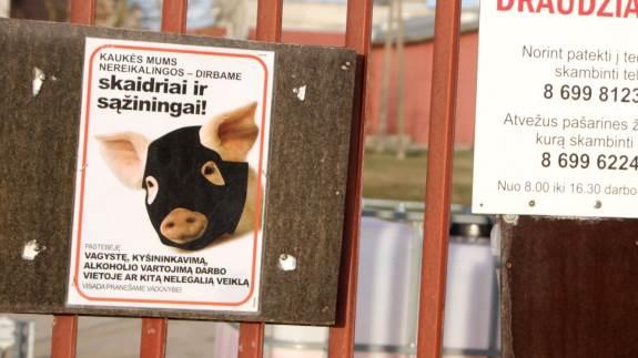 Trods advarsler er afrikansk svinepest fortsat et stort problem i Østeuropa. Arkivfoto: Jørgen P. Jensen.