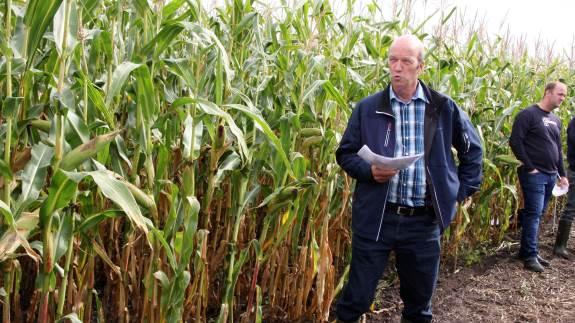Kvægrådgiver Knud R. Jensen spår, at en stor del af den nordjyske majshøst går i gang i den kommende uge – og bliver bedre, end mange har frygtet. Fotos: Christian Carus