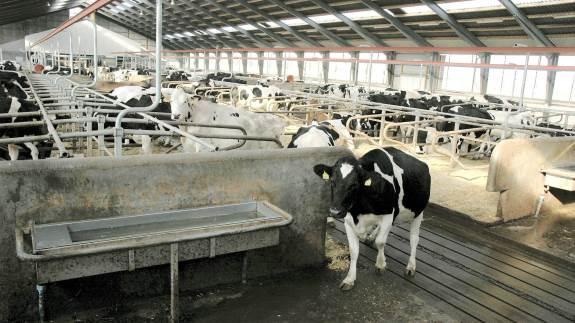 Idet køer har en meget individuel drikkehastighed, varierende fra 5 til 20 liter pr. minut, vil det som regel være hensigtsmæssigt at sikre minimum 20 liter pr. minut. Arkivfoto
