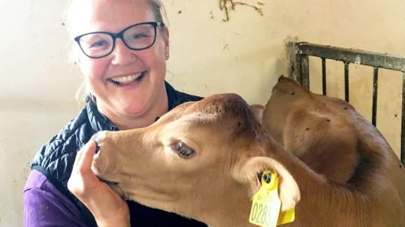 Anne Skovbjerg og Skovbjerg Dyrlægeteam har før haft succes med at sænke kalvedødeligheden. Nu gælder det køerne.