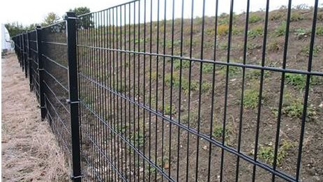 Svineafgiftsfonden punger nu op med 30 millioner, der skal være med til at betale for oprettelsen af vildsvinehegnet langs den dansk-tyske grænse. Arkivfoto.