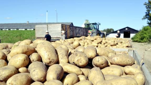 Danespo, der blandt andet producerer læggekartofler, kommer i stor klemme, som følge af EU-forbud mod Reglone.