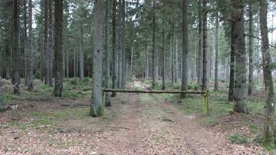 Skovejendom 116 ha - Viborg