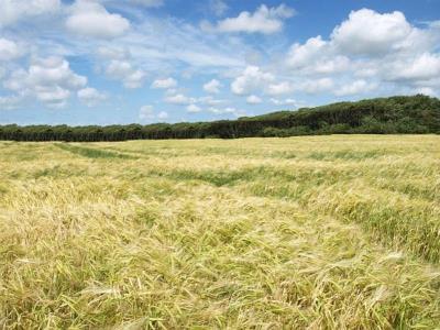 Landbrugsjord ved Hovborg
