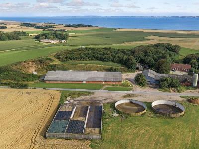 Mælkeproduktion 180 køer - 113 ha