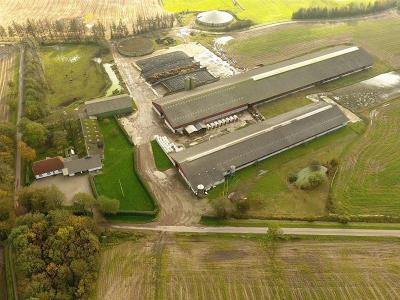 Stor og veldrevet mælkeproduktionsejendom, med højtydende besætning