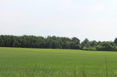 75 ha jord uden bygninger - Kibæk