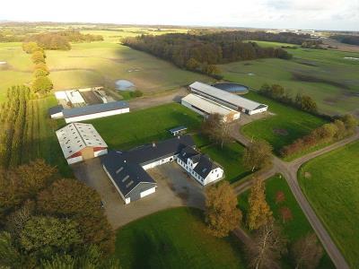 Rigtig pæn planteavls-/kvægejendom med fine bygninger og gode udlejningsaftaler