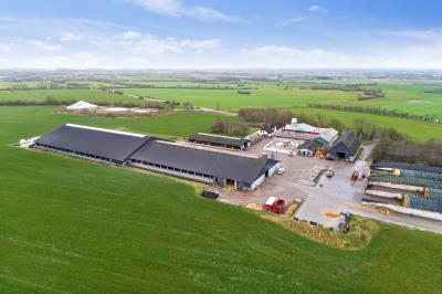 Mælkeproduktionsvirksomhed med 500 køer ved Rødekro