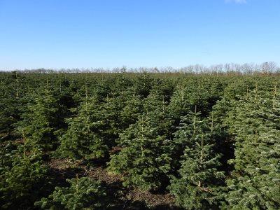 80 ha bygningsløs landbrug med juletræer og pil. Evt. Sale- and lease back.