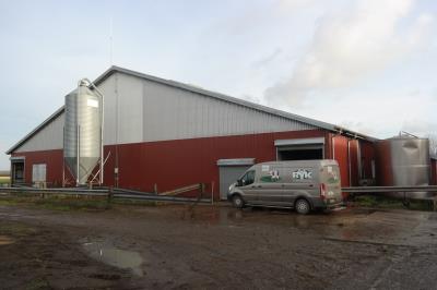 Kvæggård - ca. 300 køer med opdræt