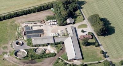 Kvæggård i fuld drift - 150 køer