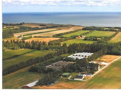 Minkfarm
