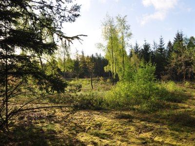 Illeris Nordre Plantage. 17,3 hektar varieret skov med 47 m2 hytte.
