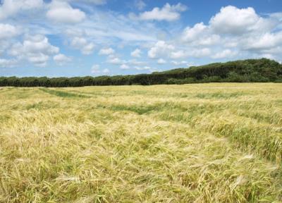 Velaronderet landbrugsjord mellem Grindsted og Esbjerg