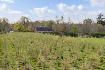 Skovejendom 40,5 ha m. fritidshus - Brande