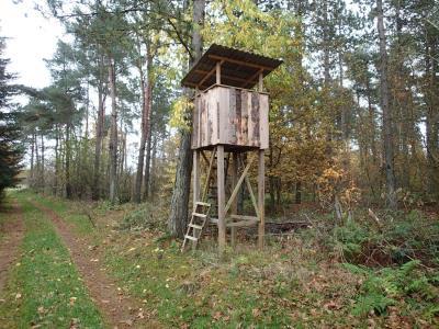 6,1 ha skov ved Tirstrup