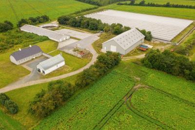 Minkfarm med kapacitet til 4.700 tæver med tilhørende planteavl