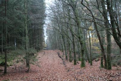 Skovejendom 13 ha uden bygninger - Randers NV