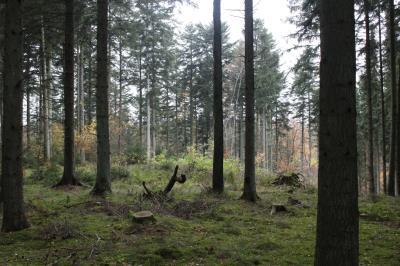 Skovejendom 9 ha uden bygninger - Randers NV